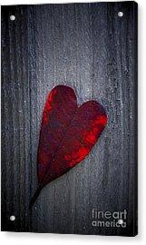 Love Acrylic Print by Svetlana Sewell