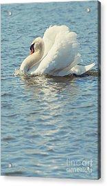 Lovely Bird Acrylic Print by Svetlana Sewell