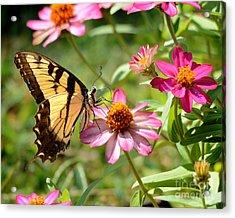 Loving Summer Garden Acrylic Print by Nava Thompson