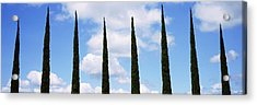 Low Angle View Of Leafless Palm Tree Acrylic Print by Panoramic Images