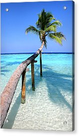 Low Bow. Tropical Palm Over Lagoon Acrylic Print by Jenny Rainbow