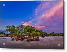 Low Tide Mangrove Acrylic Print by Marvin Spates