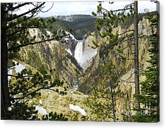 Lower Falls From Artist Point Yellowstone National Park Acrylic Print by Shawn O'Brien