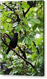 Lunch In The Rain Acrylic Print by Vadim Levin