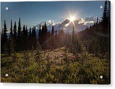 Lupine Field Sunstar Acrylic Print by Mike Reid