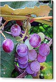 Luscious Grapes In New Orleans Louisiana Acrylic Print by Michael Hoard