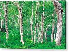 Lush Forest Acrylic Print by Panoramic Images