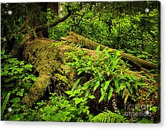 Lush Temperate Rainforest Acrylic Print by Elena Elisseeva
