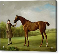 Lustre Held By A Groom Acrylic Print by George Stubbs