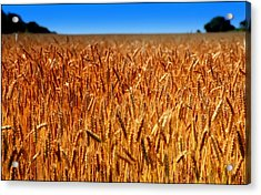 Lying In The Rye Acrylic Print by Karen Wiles