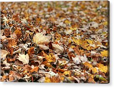 Lying On The Ground Acrylic Print by Ester  Rogers