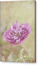 Mabel Acrylic Print by Elaine Teague