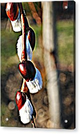 Macro Hdr Acrylic Print by Frozen in Time Fine Art Photography