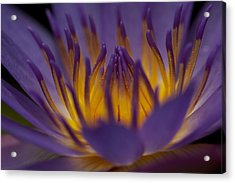Macro Water Lilly Side View Acrylic Print by Bonita Hensley