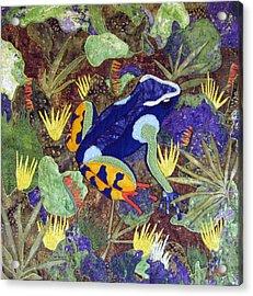 Madagascar Mantella Acrylic Print by Lynda K Boardman