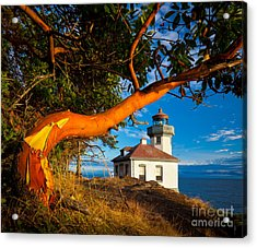 Madrone And Lighthouse Acrylic Print by Inge Johnsson