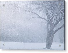 Magic Of The Season Acrylic Print by Carrie Ann Grippo-Pike