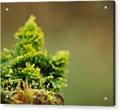Magical World Of Green And Gold Acrylic Print by Rebecca Sherman