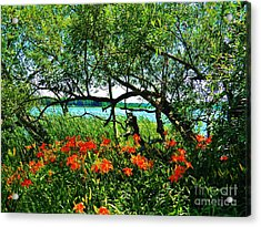 Magnificient  Acrylic Print by Judy Via-Wolff