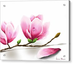 Magnolia Acrylic Print by Veronica Minozzi
