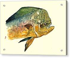 Mahi Mahi Fish Acrylic Print by Juan  Bosco
