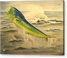 Mahi Mahi Acrylic Print by Juan  Bosco