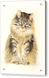 Maine Coon Cat Acrylic Print by Bonnie Rinier