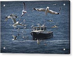 Maine Fishing Boat Chased By Gulls Acrylic Print by Randall Nyhof