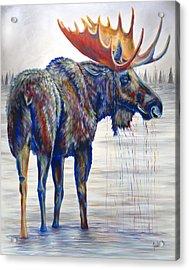 Majestic Moose Acrylic Print by Teshia Art