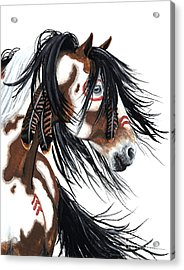 Majestic Pinto Horse Acrylic Print by AmyLyn Bihrle