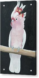 Major Mitchell Cockatoo Acrylic Print by Jan Matson
