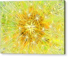 Make A Wish In Greenish Yellow Acrylic Print by Jennifer E Doll