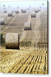 Make Hay While The Sun Shines  Acrylic Print by Heiko Koehrer-Wagner