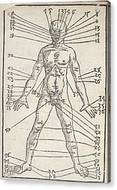 Male Anatomy Acrylic Print by British Library