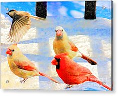 Male Cardinal With Two Females And Junco Acrylic Print by Janette Boyd