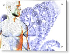 Male Figure With Dna Acrylic Print by Carol & Mike Werner
