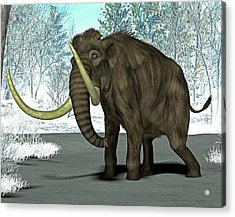 Mammoth Acrylic Print by Friedrich Saurer
