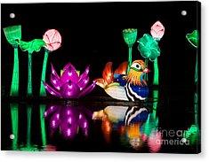 Mandarin Duck Chinese Lantern Acrylic Print by Tim Gainey