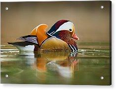 Mandarin Acrylic Print by Yuri Peress