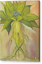 Mandrake Acrylic Print by Conor Murphy