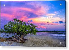 Mangrove By The Bay Acrylic Print by Marvin Spates