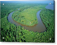 Mangrove Forest In Mahakam Delta Acrylic Print by Cyril Ruoso