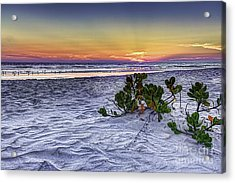 Mangrove On The Beach Acrylic Print by Marvin Spates
