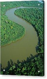 Mangrove Rhizophora Sp In Mahakam Delta Acrylic Print by Cyril Ruoso
