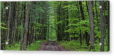 Manistee National Forest Michigan Acrylic Print by Steve Gadomski