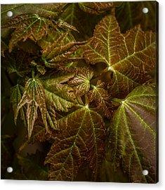 Maple Leaf Abstract Acrylic Print by Paul Freidlund