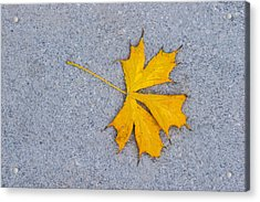 Maple Leaf On Granite 5 Acrylic Print by Alexander Senin