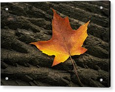 Maple Leaf Acrylic Print by Scott Norris