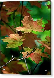 Maple Leaves In The Shadows Acrylic Print by Rosanne Jordan