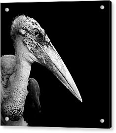 Portrait Of Marabou Stork In Black And White Acrylic Print by Lukas Holas